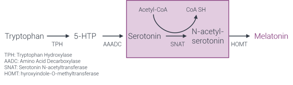 serotonin, melatonin synthesis