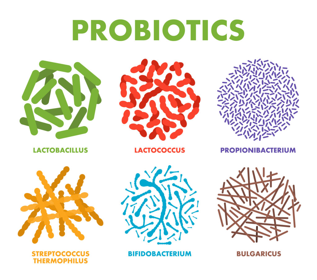 types of probiotics