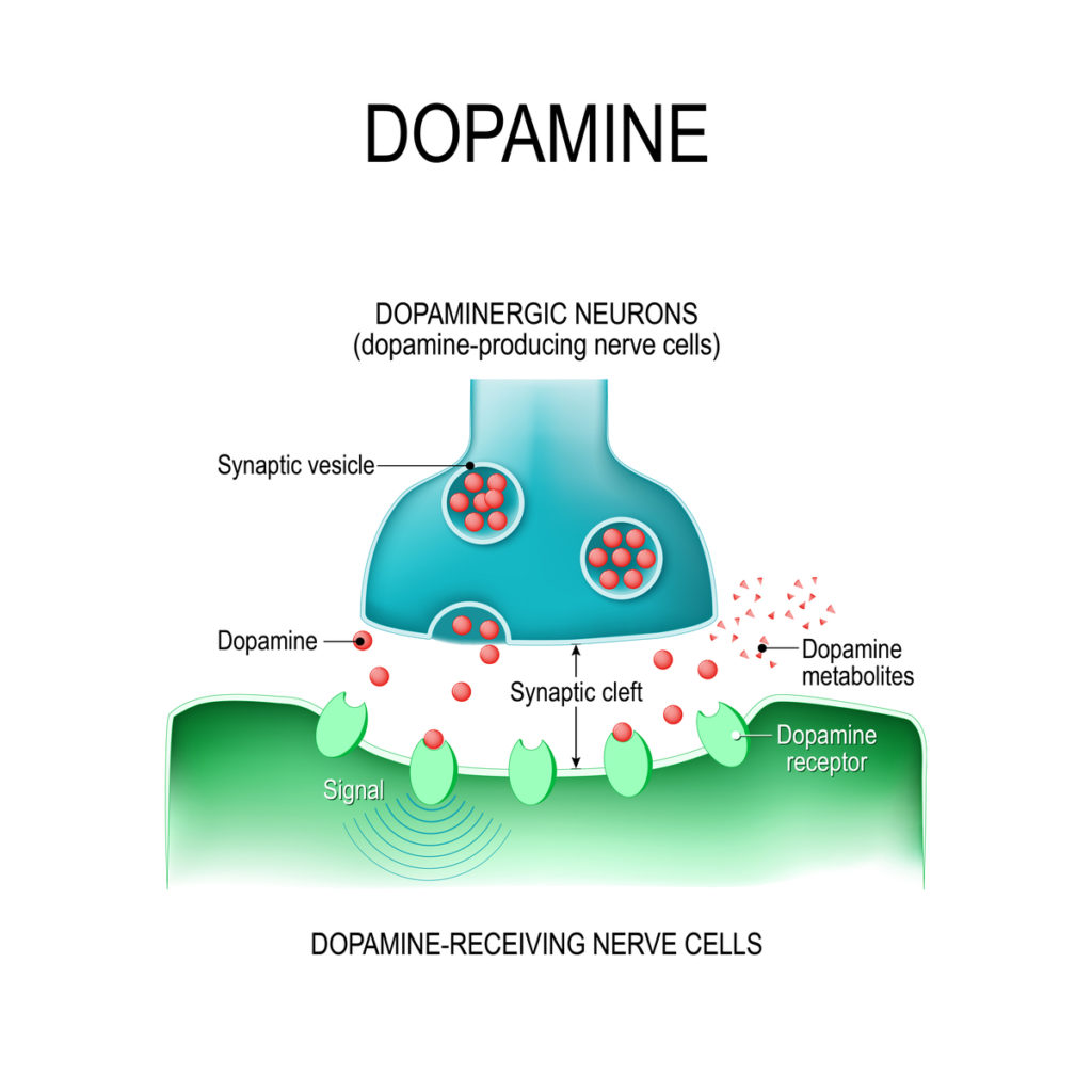 dopamine info graphic