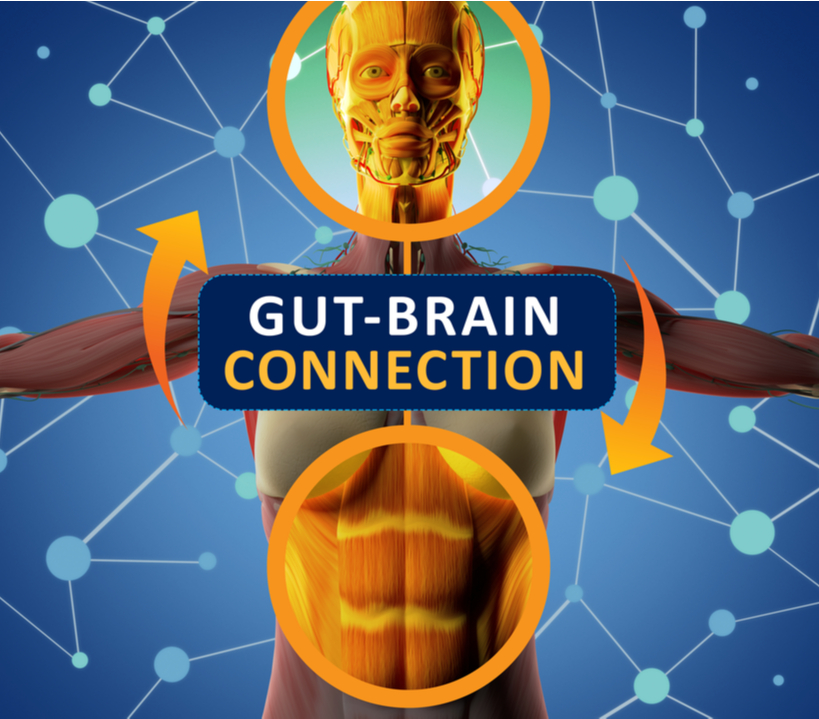Gut-Brain Connection - Sanesco Health