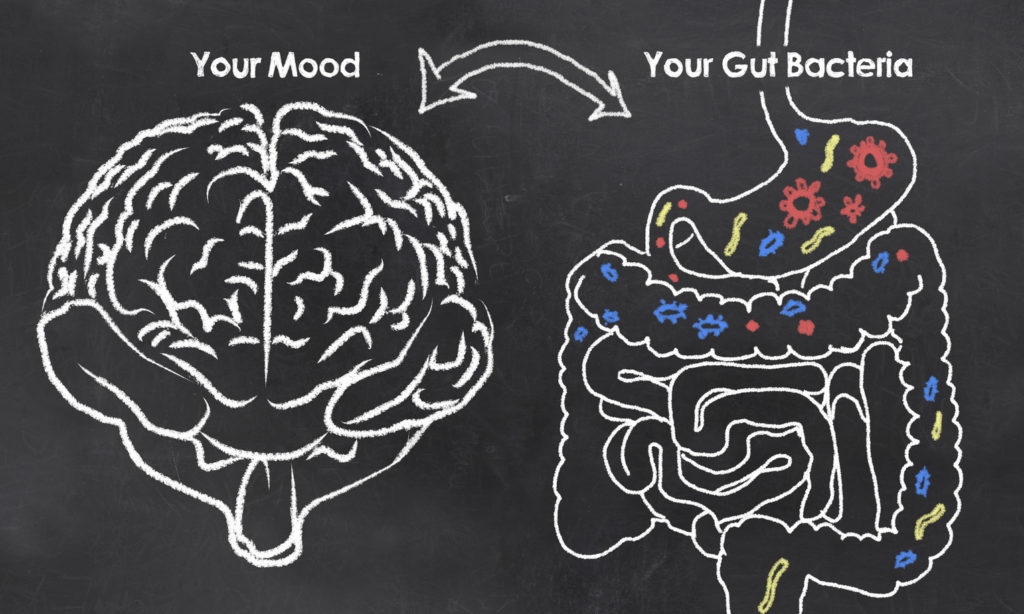 connection between your gut bacteria and your mood