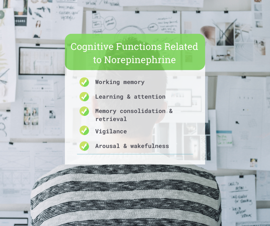 Cognitive Health and Your Neurotransmitters 3